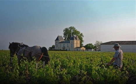 Bordelais should not release 2013 grand vin | Vitabella Wine Daily Gossip | Scoop.it