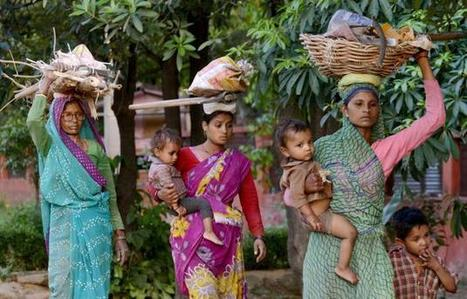 Migration slowing, population growth declining - The Hindu | Geography | Scoop.it
