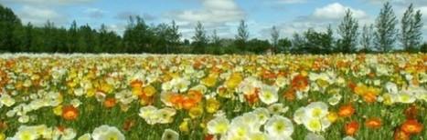 Amtecandina | Producen etanol a partir de residuos de la floricultura - Amtecandina | El cultivo de gladiolos | Scoop.it