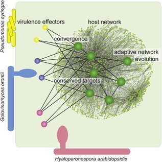 Convergent Targeting of a Common Host Protein-Network by Pathogen Effectors from Three Kingdoms of Life | Plant-Microbe Interactions | Scoop.it