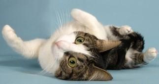 How to Decode Your Cat's Behavior | Cat Stuff | Scoop.it