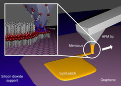 Biomimetic Membranes Adapted for Graphene Substrate, May Open New Bionanotech Applications | Biomimicry | Scoop.it