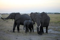 Malawi – Funding Enables Massive Strike Back against Illegal Wildlife Trade | Farming, Forests, Water, Fishing and Environment | Scoop.it