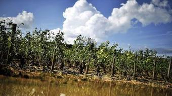 Mother Nature just won't give French vineyards a break | Vitabella Wine Daily Gossip | Scoop.it