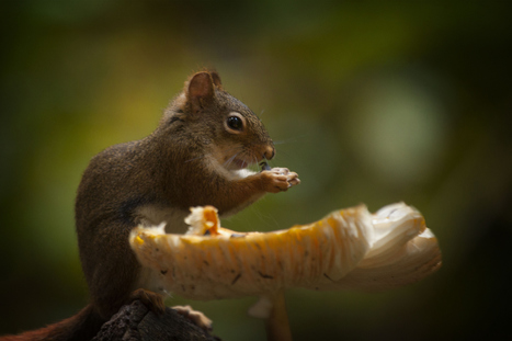 A mushroom as table by Andre Villeneuve | I didn't know it was impossible.. and I did it :-) - No sabia que era imposible.. y lo hice :-) | Scoop.it