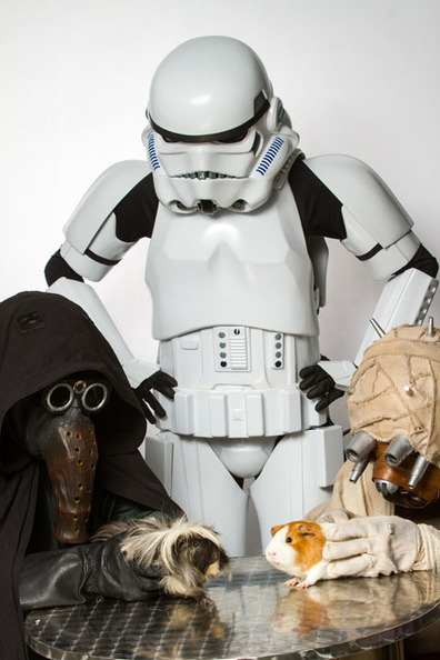 A Star Wars-Themed Photo Shoot to Find Homes for Shelter Animals | Educational technology , Erate, Broadband and Connectivity | Scoop.it