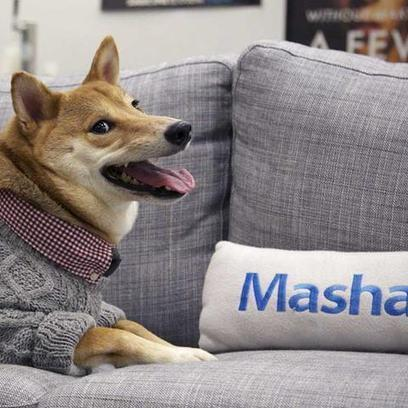 Menswear Dog's 10 Fetching Fashion Tips | Digital-News on Scoop.it today | Scoop.it