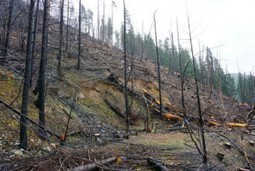 Sign Petition to Stop Westside – One of the Largest Timber Sales in US History! | GarryRogers NatCon News | Scoop.it