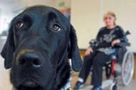 INREES | Des animaux thérapeutes - la zoothérapie testée dans certains hôpitaux | Psychologie | Scoop.it