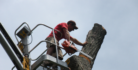 Muller Tree Service of Grand Rapids   The Grand Rapids Tree Removal Specialists   Latest Information   Scoop.it