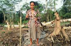 WWF - Borneo (Kalimantan) and Sumatra - People   KALIMANTAN   Scoop.it