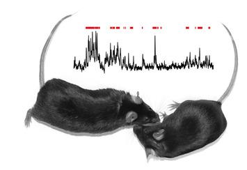 Scientists tie social behavior to activity in specific brain circuit | Kinsanity | Scoop.it