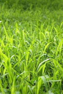 Wildlife Extra News - Let your grass grow…and invite wildlife in | 100 Acre Wood | Scoop.it