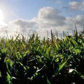 José Bové et Greenpeace fauchent un champ d'OGM près de Toulouse | Pour une agriculture et une alimentation respectueuses des hommes et de l'environnement | Scoop.it