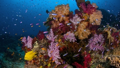 Coral reefs can communicate with fish, and many of them are crying for help | Global Aquaculture News & Events | Scoop.it