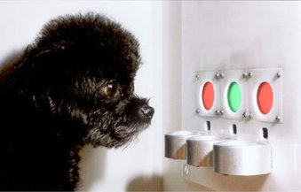 How Dogs See the World: The Evolutionary Story of Color Vision | Dog Training - Mark Mendoza | Scoop.it