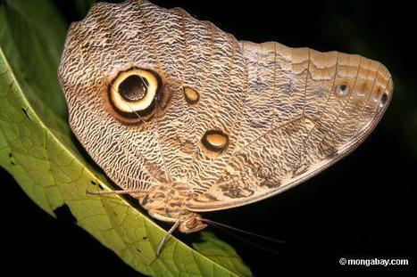 Pourquoi les forêts tropicales abritent-elles tant d'espèces ? | EntomoScience | Scoop.it