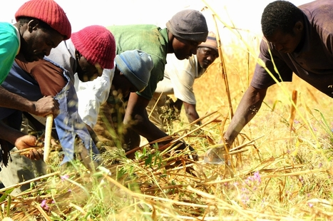 Promoting Agricultural Development to Meet Future Food and Energy Challenges   Climate Change, Agriculture & Food Security   Scoop.it