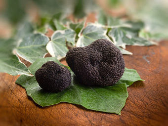 Le Marche Celebrates the Harvest Season and Truffles | Le Marche and Food | Scoop.it