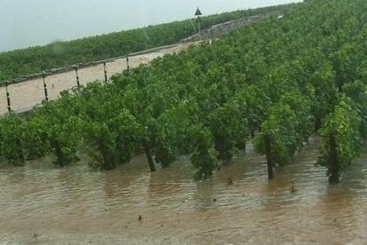 Côte de Beaune : les orages font de violents dégâts - Terre de Vins | Christophe Durand Conseils | Scoop.it