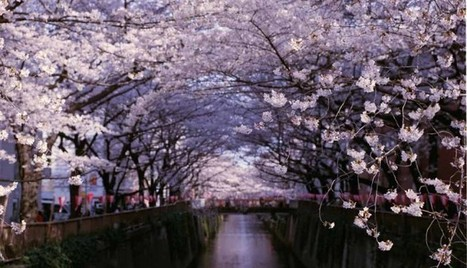 Japanese Cherry Blossom Travel And Leisure In Tokyo Japan | asia holidays destination picture | Beauty building, park, and city in asia | Scoop.it