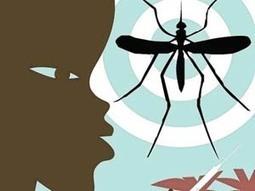 Nueve cosas que debería saber sobre el virus zika | Biología de Cosas de Ciencias | Scoop.it