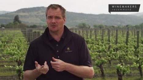 Will the 100 point Wine Scoring System Survive?   Vitabella Wine Daily Gossip   Scoop.it