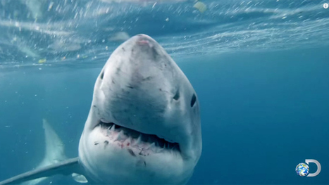 Shark Week Draws Record Demo Ratings for Discovery | All about water, the oceans, environmental issues | Scoop.it
