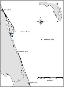 #Fatal #Asphyxiation in Bottlenose #Dolphins (Tursiops truncatus) from  #IndianRiverLagoon ~ prey #availability or #fishingGear  ? ~ | Rescue our Ocean's & it's species from Man's Pollution! | Scoop.it