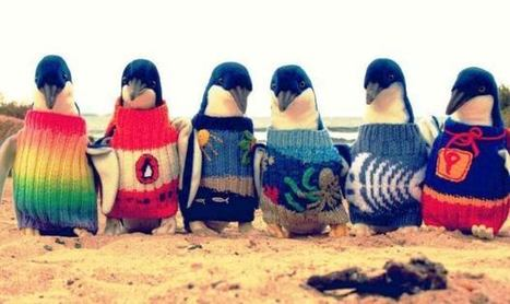 Why do these penguins wear hand-knitted jumpers? | Language travel at its best | Scoop.it