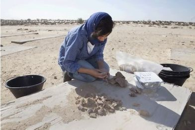 Sharjah's 3,000-year-old clue to the first domesticated camels | World Neolithic | Scoop.it