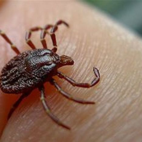 Five people with 'Lyme-like' symptoms suicided in WA: inquiry | Lyme Disease & Other Vector Borne Diseases | Scoop.it