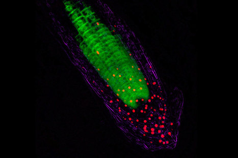 Plants channel light to their roots | Communicating Science | Scoop.it