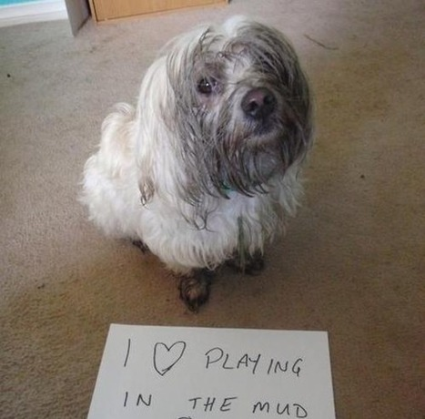 Dog Owners Will Understand (20 Pics) | Dog Love | Scoop.it