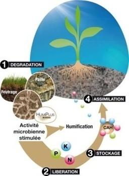 Activateur biologique de sol - HumiPlus de Timac Agro - Web-agri.fr   Innovation agriculture   Scoop.it