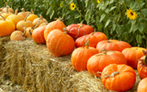 All About Pumpkins and Winter Squash | Halloween & Spooky Fun Stuff~ | Scoop.it