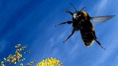 Bee Flight Inspires Robot Design | Social Foraging | Scoop.it