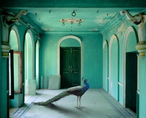 Artiste - Karen Knorr, India Song (Allemande) | Découvertes artistiques à Mumbai | Scoop.it