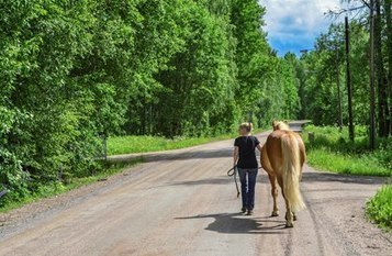 Shared Science: Human and Equine Health Similarities | Cheval | Scoop.it