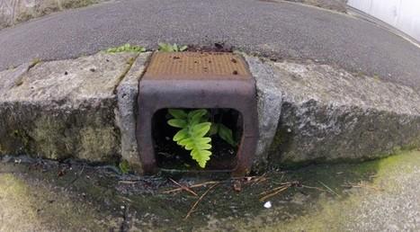 Opération désherbons | biodiversité en milieu urbain | Scoop.it