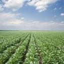 Chine : 58 millions de tonnes de soja génétiquement modifié importées en 2012 | Attitude BIO | CAP21 | Scoop.it