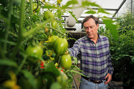 New York Times writes about Harry Klee's tomato research   Plant Biology Teaching Resources (Higher Education)   Scoop.it