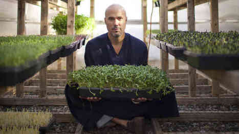 Introducing Microgreens: Younger, And Maybe More Nutritious, Vegetables : NPR | Vertical Farm - Food Factory | Scoop.it