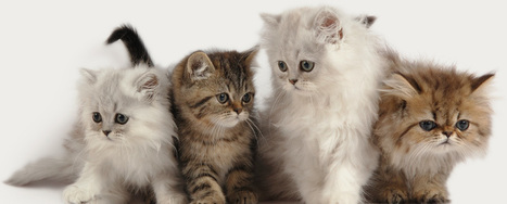 Referral Services at Mount Pleasant Veterinary Group   Mount Pleasant Vet   Scoop.it