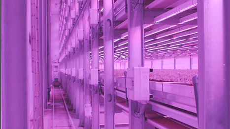 AGRITECTURE - Phillips' Large New Vertical LED-lit Urban Garden... | Vertical Farm - Food Factory | Scoop.it