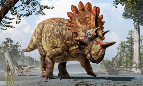 New species of dinosaur, the regaliceratops, discovered in Canada   Vloasis vlogging   Scoop.it