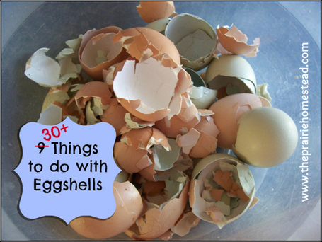 30+ Things to Do with Eggshells | The Prairie Homestead | Sizzlin' News | Scoop.it