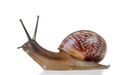 The E-Learning Slug Awards | Kennisproductiviteit | Scoop.it