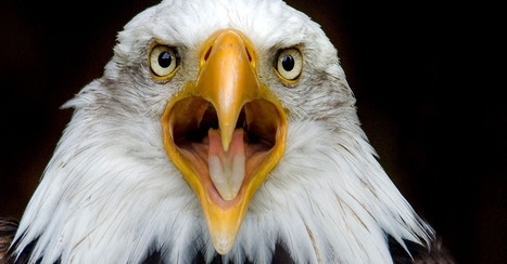 Eagle Cam Is the Most Majestic Thing You'll See All Day [VIDEO] | Just Plain Cool. | Scoop.it