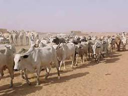 The Zaghawa Tribe of Sudan   The Translator: Darfur War   Scoop.it
